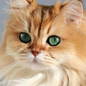Smoothie the Cat net worth